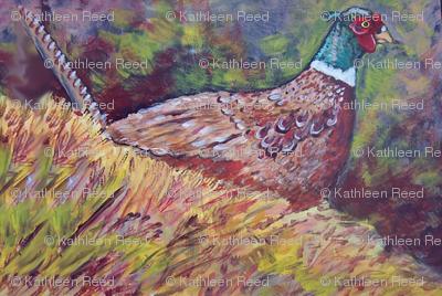 my_pheasant