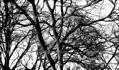 The Tree Lace ~ Black and White