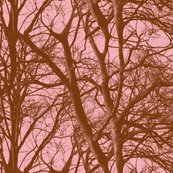 Pink_tree_lace2_shop_thumb