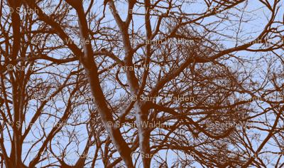 The Tree Lace ~ Twilight