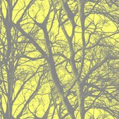 Yellow_tree_lace_shop_thumb