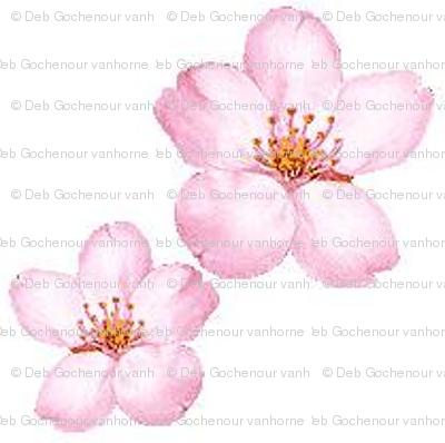 oriental_cherry_blossoms m