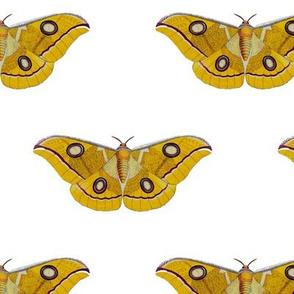 Vintage Moth