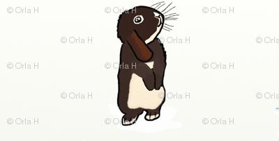 Mini Lop Rabbit - Hazel
