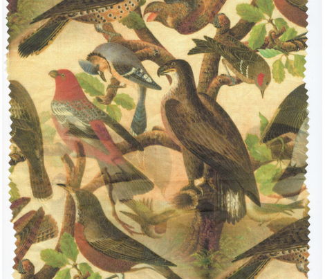Birds_national_art_gallery_19th_century_made_seamless_and_color_perfected_comment_280301_preview