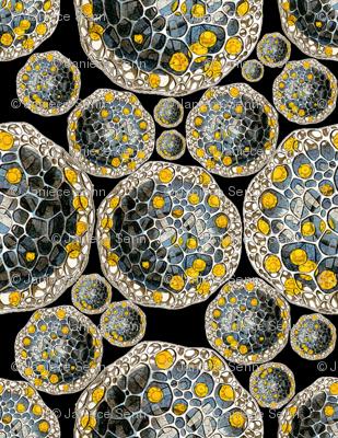 Haeckel Revival
