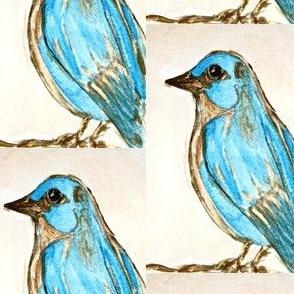 Bluebird No1