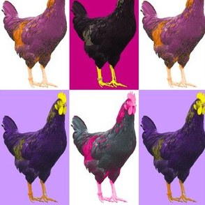 Pop Pink Purple Art Chook Chook Chook