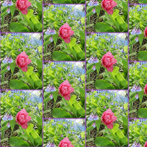 One Pink Tulip and Bluebells