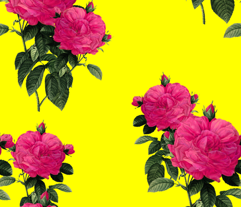 Redoute' Rose ~ Hot Pink and La! Yellow ~ Romp In The Garden fabric by peacoquettedesigns on Spoonflower - custom fabric
