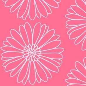 Daisy Daisy in Pink