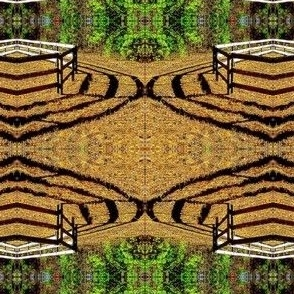 Fence's Shadow