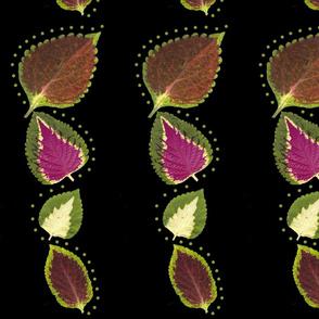 Coleus Leaf  Border