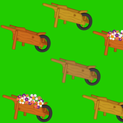 Wheelbarrows and Flowers