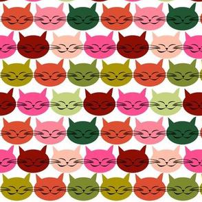 chat_c_est_toi_le_chat_multico_M