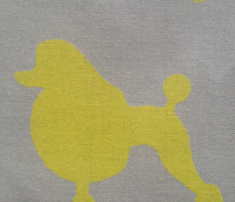 Poodle of mine in yellow