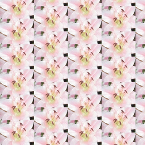 Savannah's Flowers