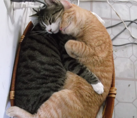 Cat Pillow