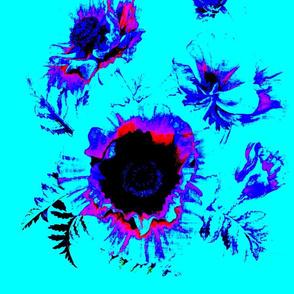 Moonlight poppy