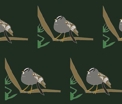 Rwhite-crowned-sparrow-g-2013-color_shop_preview