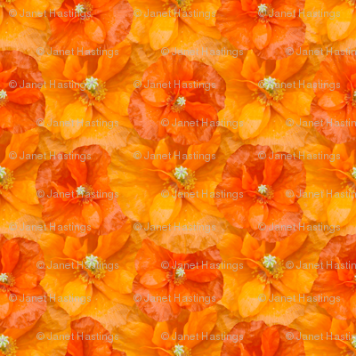 orange_poppy_seamless
