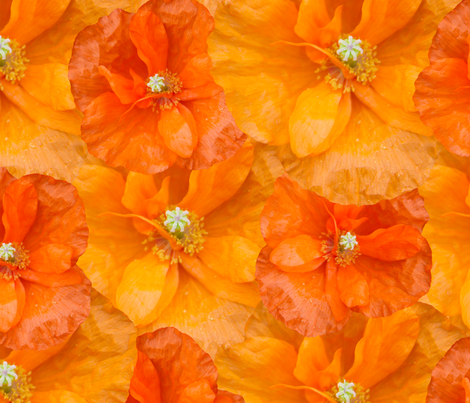 orange_poppy_seamless fabric by bluewrendesigns on Spoonflower - custom fabric