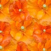 Orange_poppy_seamless_shop_thumb