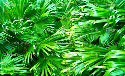 Deep Forrest Tropical Palms