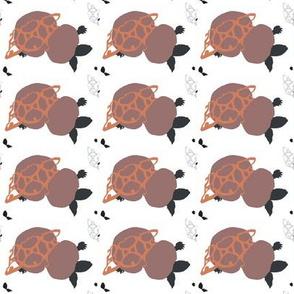 turtle_f2-ch