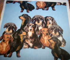 Rdachshunds_in_blue_comment_285242_thumb