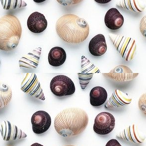 Studio_Sea_Shells_1
