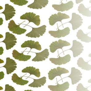 Ginkgo leaves gradient