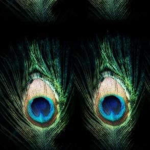 Fancy Black Peacock