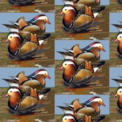 Rmandarin_ducks_shop_thumb