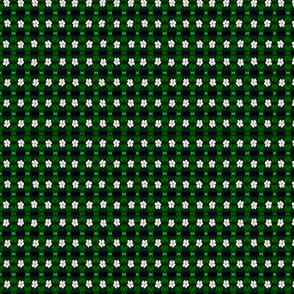 MA-_27-Emerald Green Foliage-_Midnight_Blue_-White_Flowers