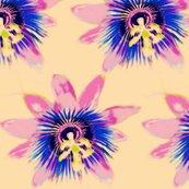 Rrrpassion-flower2_ed_ed_ed_shop_thumb