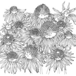 BAUER-Echinacea
