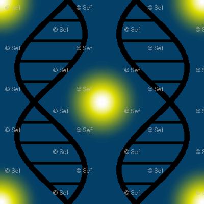 firefly DNA argyle