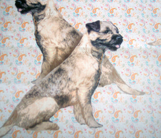 Rborder_terrier_two_comment_316089_thumb