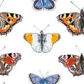 Rbutterfly_pattern_1_shop_thumb
