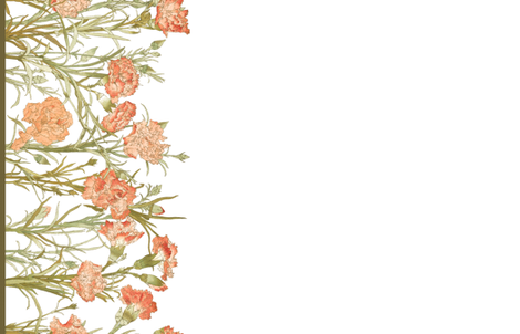 Carnation Border Print fabric by peacoquettedesigns on Spoonflower - custom fabric