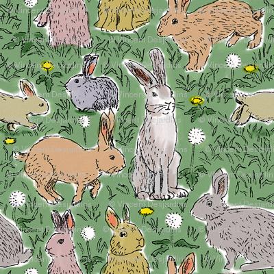 Rabbits and Dandelions