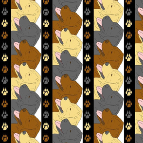 Labrador faces border