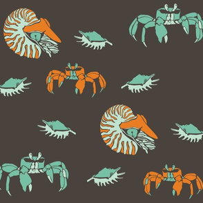 Nautilus Crabs and Shells