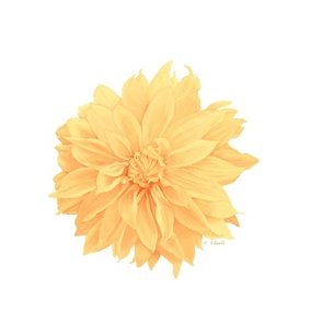 dahlia_-_pale_yellow__10x10_for_spoonflower