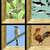 Rrrattic_windows_aviary8_shop_thumb