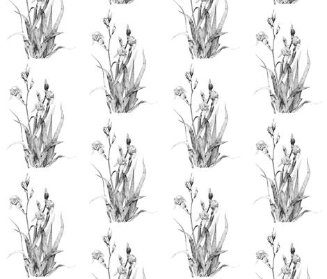 Iris plant drawing fabric by botanica on Spoonflower - custom fabric