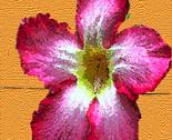 Rvan_gogh_flower_thumb