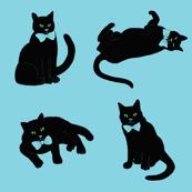 Black cats on blue