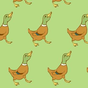 Marching Ducks